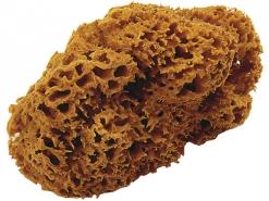 108 Природна морська губка OIKOS