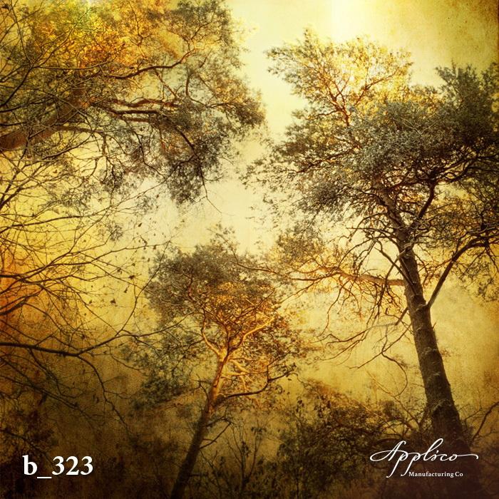B_0323