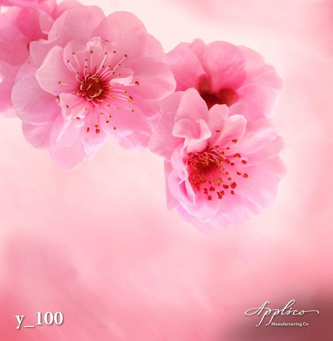 Y_0100